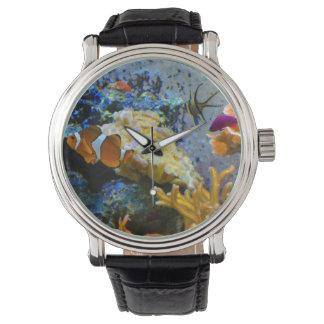 reef fish coral ocean watch