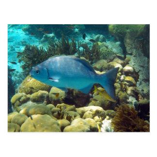 Reef Fish Postcard