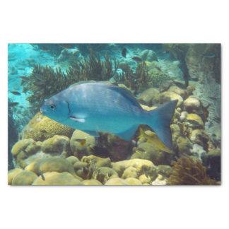 Reef Fish Tissue Paper