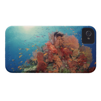 Reef scenic of hard corals , soft corals 2 iPhone 4 cases