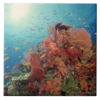 Reef scenic of hard corals , soft corals 2 tile
