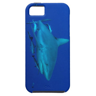 Reef Shark Great Barrier Reef Coral Sea iPhone 5 Cases