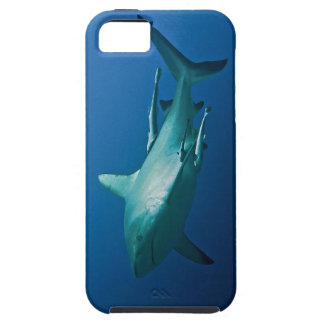 Reef Shark Great Barrier Reef Coral Sea iPhone 5 Cover