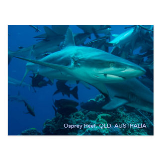 Reef Shark Great Barrier Reef Coral Sea Postcard