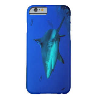 Reef Shark on the Great Barrier Reef Barely There iPhone 6 Case