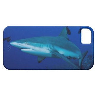 Reef Shark on the Great Barrier Reef iPhone 5 Cover