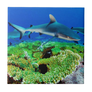 Reef Shark Photos Tile
