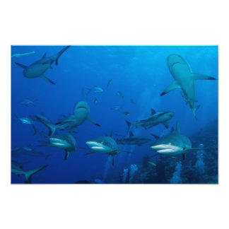 Reef Sharks in Formation Photo Print