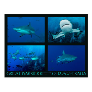 Reef Sharks of the Coral Sea Postcard