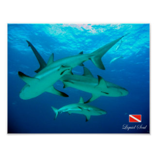 Reef Sharks Poster
