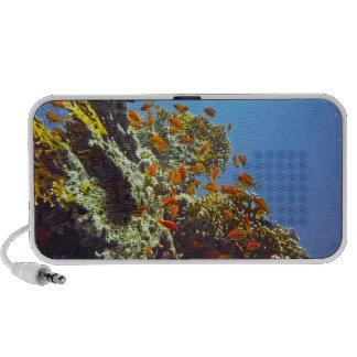 Reef Portable Speakers