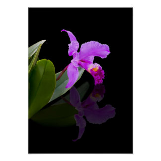 Reflected Beauty Orchid Poster