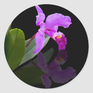 Reflected Beauty Orchid  Sticker