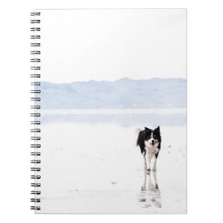 Reflected border collie notebook