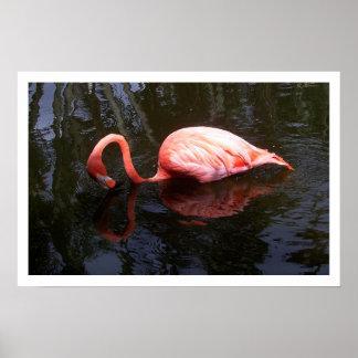 Reflecting Flamingo Poster