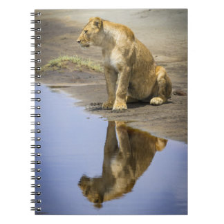 Reflection of a Lioness Notebook