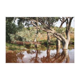 Reflections: Creek and gumtrees, Flinders Ranges Canvas Print