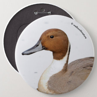Reflections of a Northern Pintail Duck 6 Inch Round Button