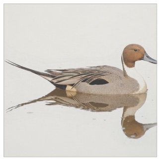 Reflections of a Northern Pintail Duck Fabric