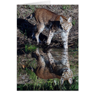 Reflections of a Siberian Lynx Card