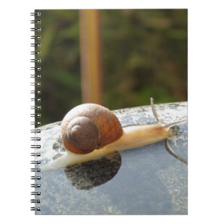 Refreshing Snail Spiral Note Book