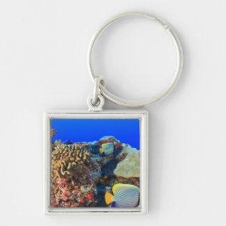 Regal Angelfish Pygoplites diacanthus), Silver-Colored Square Keychain