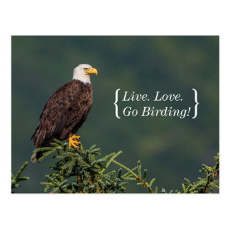 Regal Bald Eagle Postcard