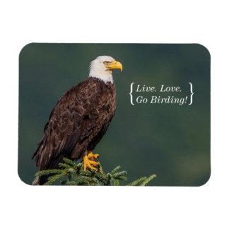 Regal Bald Eagle Rectangular Photo Magnet