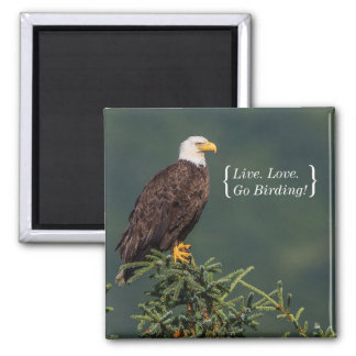 Regal Bald Eagle Square Magnet