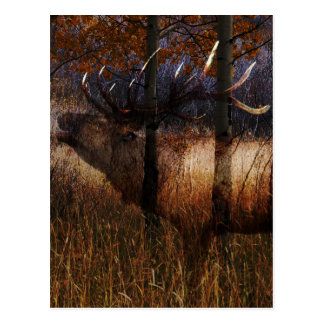 Regal Elk Postcard