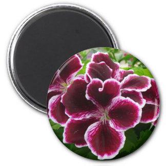 Regal Geranium Flowers 2 Inch Round Magnet