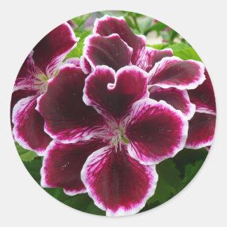 Regal Geranium Flowers Round Sticker