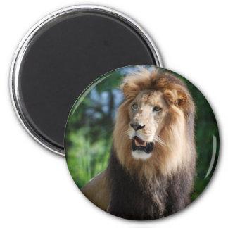 Regal Lion Magnet Magnets