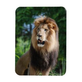 Regal Lion  Premium Magnet Vinyl Magnet