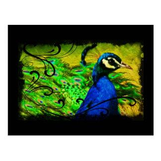Regal Peacock Elegant Fine Art  Postcard