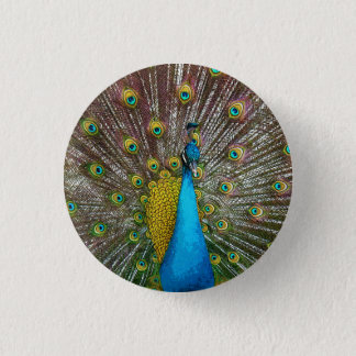 Regal Peacock with Teal and Gold Tail Feathers 1 Inch Round Button