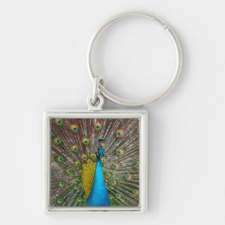 Regal Peacock with Teal Blue and Gold Feathers Silver-Colored Square Keychain