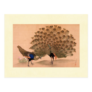 Regal Peacocks Postcards