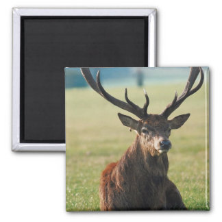 Regal Red Deer Magnet