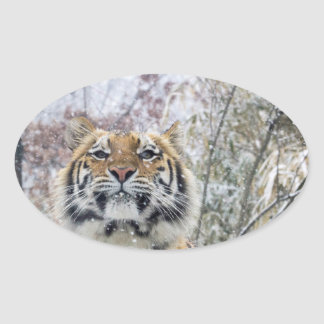 Regal Tiger in Snow Oval Sticker