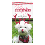 Reindeer Antler & Red Nose Pet Christmas! Photo Cards