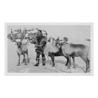 Reindeer Herd Alaska 1909 Poster