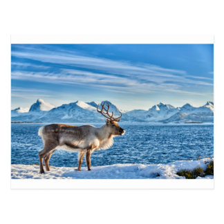 Reindeer in snow covered landscape at sea postcard