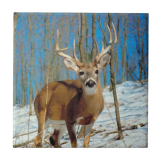 Reindeer In The Forest In The Snow Photo Tile