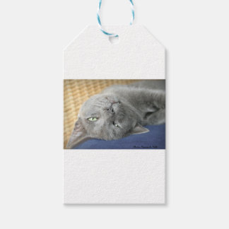 Relax! Grey Purring Cat Gift Tag