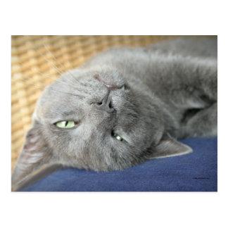 Relax! Grey Purring Cat horizontal Postcard