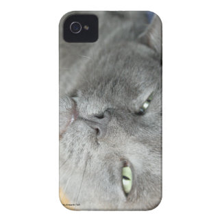 Relax! Grey Purring Cat iPhone 4 Case
