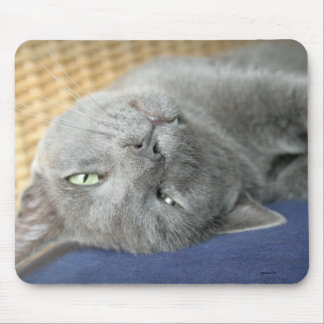 Relax! Grey Purring Cat Mouse Pad