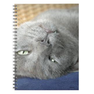 Relax! Grey Purring Cat Notebook