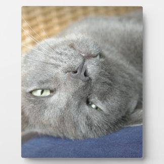 Relax! Grey Purring Cat Plaque